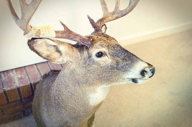 WillytheWhiteTail